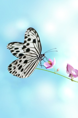 Rice Paper Butterfly on pink flower, sky background photo