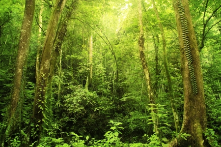 Tropical Rainforest Landscape, Malaysia, Asia Stock Photo