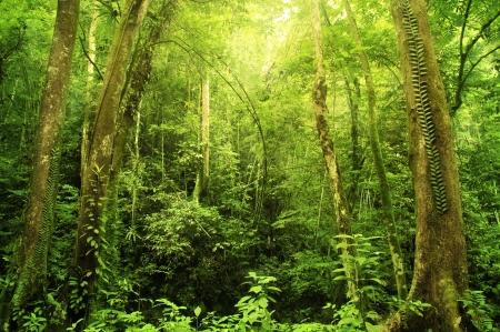 jungle background: Tropical Rainforest Landscape, Malaysia, Asia Stock Photo