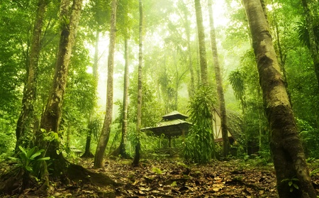wooden hut: Green forest and huts in a misty morning, Malaysia.