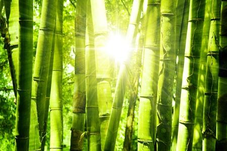 亞洲竹林的早晨的陽光。