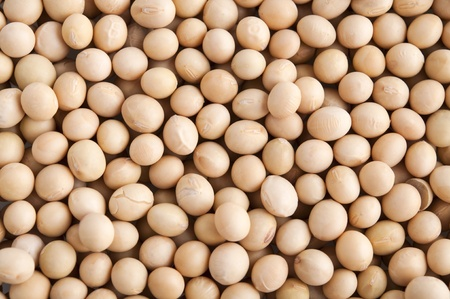 modified: Organic soybeans background, non-genetic modified.