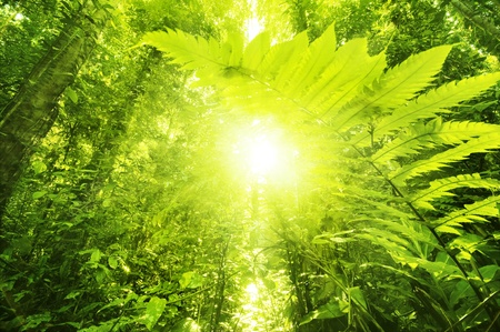 tropical rainforest: Sun shining into tropical forest, low angle view. Stock Photo