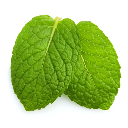 Isolated macro of fresh mint leaves. Stock Photo - 9181325