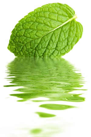 leaf close up: Close up mint leaf water reflection Stock Photo