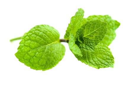 Green Mint on white background photo