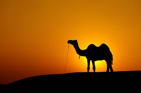 Desert landscape with camel at sunset photo