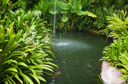 backyards: Tropical garden, pond and plants.
