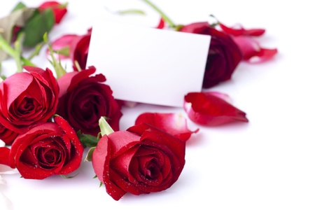 natural love: Red rose with petals and blank gift card for text