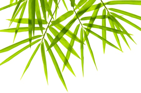 tropical border: Bamboo leaves on white background Stock Photo