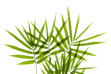 full frames: Bamboo leaves on white background Stock Photo