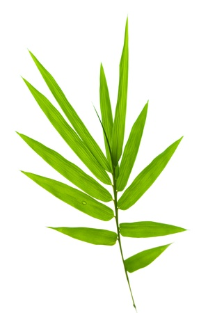 Bamboo leaves on white background photo