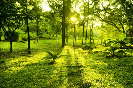 Green trees in park, a morning view with backlight photo