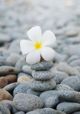 Still life with Frangipani flowers and pebbles photo