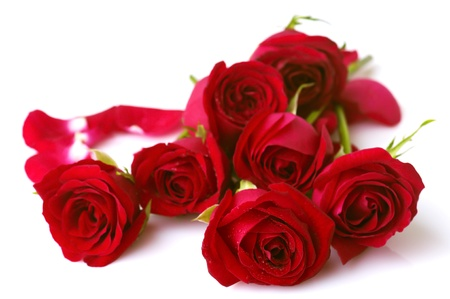 bunch of red roses: Image of roses on white background. Stock Photo