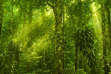 Sun shining into tropical forest photo