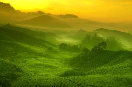 Sunrise uitzicht op theeplantage landschap aan Cameron Highlands, Maleisië.