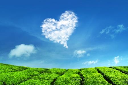 Nube de amor y plantaciones de té en Cameron Highlands en Malasia.