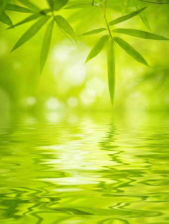 Close up bamboo leaves with water reflection, soft focus photo