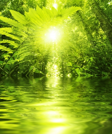 Sun shining into tropical forest, low angle view with water reflection photo