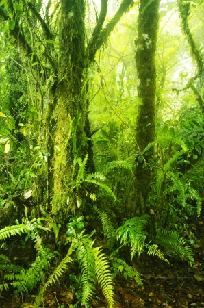 cameron highlands: Mossy forest, cameron highlands Malaysia Stock Photo