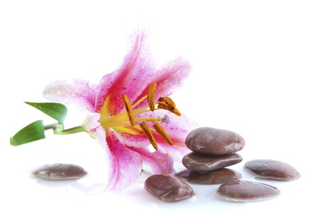 Pink lily and stones, with water reflection Stock Photo - 14269620