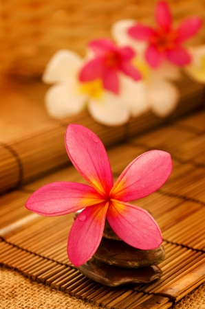 Tropical spa with Frangipani flowers in low lighting, suitable for spa related theme. Stock Photo - 15121336