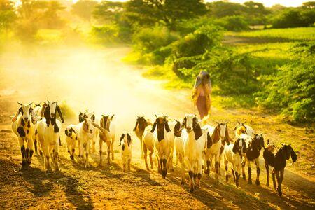Lifestyle of Burmese in Bagan , Myanmar Stock Photo - 16185093