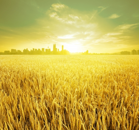 aratás: Kuala Lumpur a főváros, Malajzia, landspace kilátással rizsföld ültetvény reggel napkelte