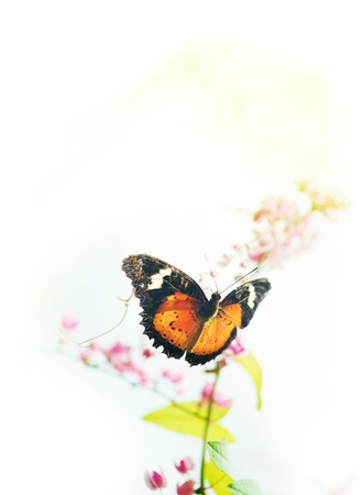 butterfly on flower: Butterfly on flower with copy space on top. Stock Photo