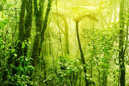 incredible: Tropical green mossy rainforest with mist and fog in early morning.