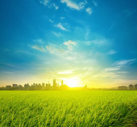 Kuala Lumpur is the capital city of Malaysia, landscape view over rice field plantation farming in morning sunrise photo