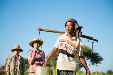 Group of Traditional Asian farmers working in paddy field photo