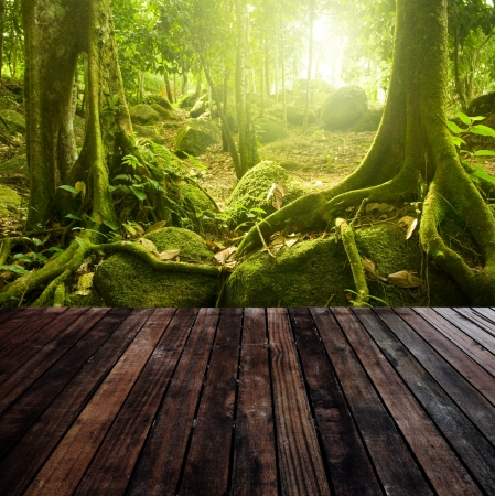 incredible: Wooden platform and green forest with ray of light  Stock Photo
