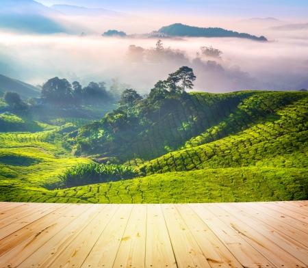 Plancher de bois sur les plantations de thé à Cameron Highlands en Malaisie. Lever tôt le matin avec le brouillard. Banque d'images