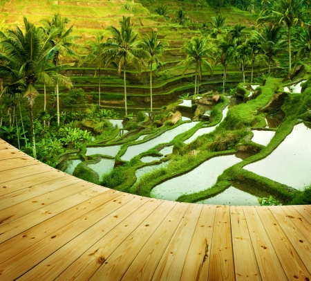 Wooden platform beside terrace rice fields in morning sunrise, Ubud, Bali, Indonesia photo