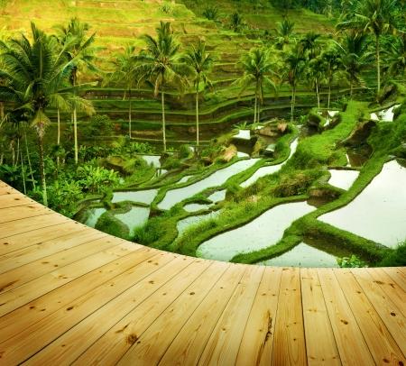 ubud: Wooden platform beside terrace rice fields in morning sunrise, Ubud, Bali, Indonesia