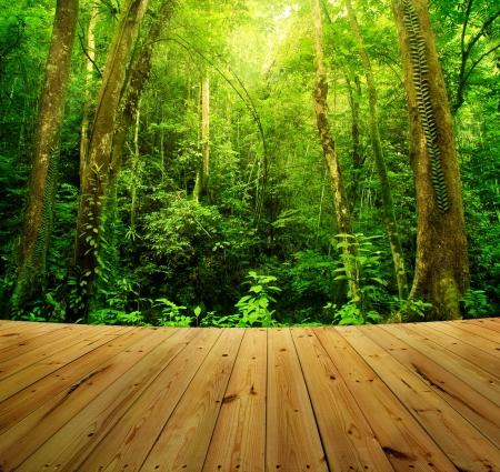 Houten vloer en Tropisch regenwoud landschap, Maleisië, Azië Stockfoto