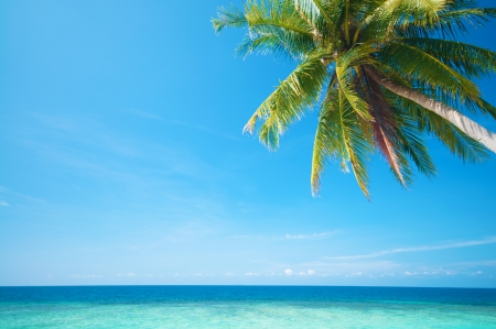 Summer sea view with coconut tree at Perhentian island, Malaysia