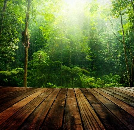 木地板的視角和綠色森林與光射線。 版權商用圖片