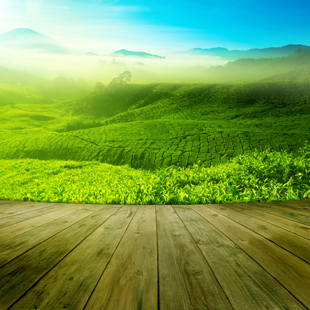 summer field: Wood platform landscape view of tea plantation with blue sky in morning. Beautiful tea field Cameron Highlands in Malaysia.