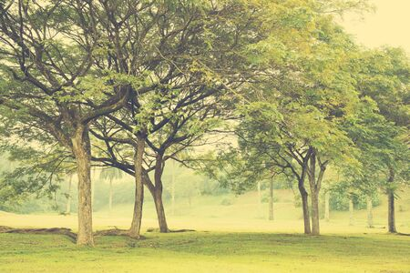 creative background: Green trees in park, a morning view in vintage toned.