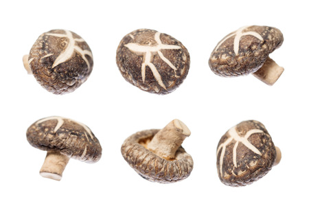 shiitake: Dried shiitake mushrooms in different angle isolated on white background.