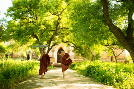 ethnic people: Two little playful Buddhist novice monks running outdoors under shade of green tree, outside monastery, Myanmar.