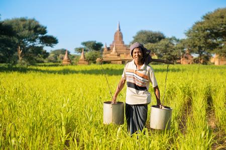 watering plant: Portrait of a Asian Burmese farmer watering plant at farmland.