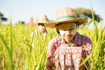 thanaka: Portrait of a Burmese women farmer with thanaka powdered face harvesting in field. Stock Photo