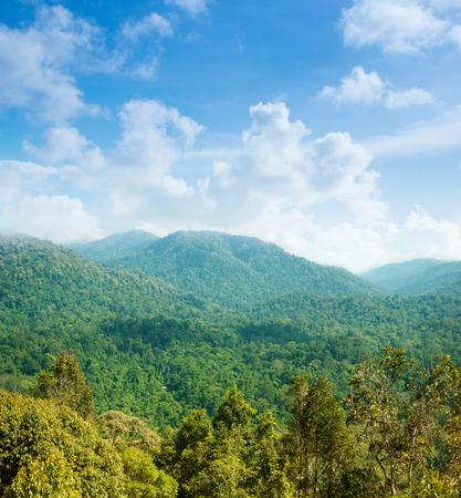 Tropical green forest landscape view from bukit terisek, Taman Negara, Malaysia.