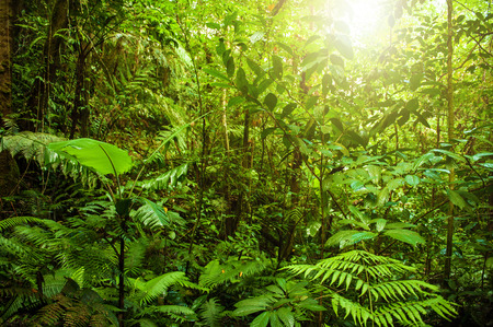 Fantastic tropical green forest landscape with sun flare in morning. Stock Photo