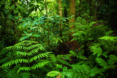 朝の幻想的な熱帯の緑の森の風景です。