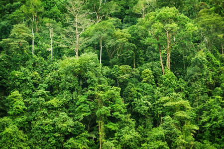 Tropical green forest landscape view, National Park, Malaysia.